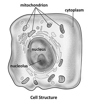 Cell Diagram